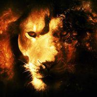 lion-normand