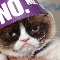 photo de profil de Grumpy Cat