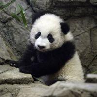 photo de profil de R3D HAN