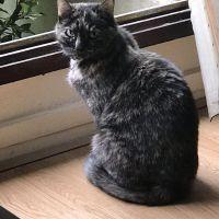 photo de profil de Petos