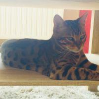 photo de profil de tefer12
