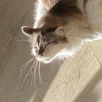 photo de profil de ragazza34