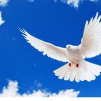photo de profil de White Dove