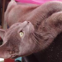 photo de profil de Sporovator