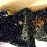photo de profil de Mayloua