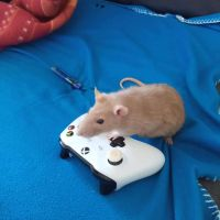 photo de profil de Mr RAT