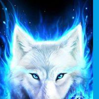 photo de profil de Arctic Wolf